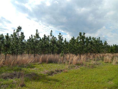 Long Leaf Pine Tract : Stapleton : Jefferson County : Georgia