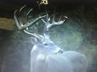 318 Acres High Game Fence : Woodville : Wilkinson County : Mississippi