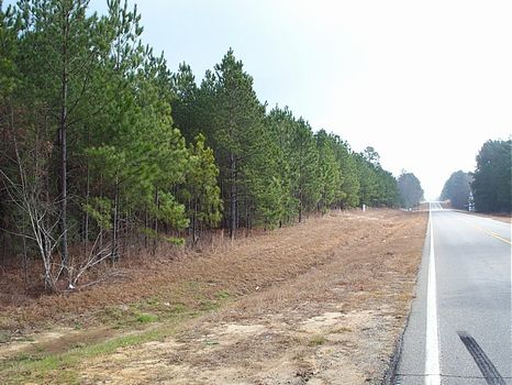 136 Acres | Timber & Great Location : Kite : Johnson County : Georgia