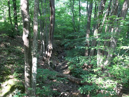 Jago Valley Rd - 24 Acres : Amesville : Athens County : Ohio
