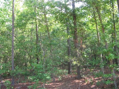 44 Acres Near Wallace, Sc : Wallace : Marlboro County : South Carolina