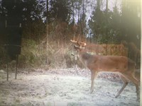 Bowhunter Or Gun Hunter's Dream : Rupert : Taylor County : Georgia