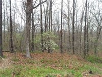 .61 Acres- Bella Vista, Ar 72714 : Bella Vista : Benton County : Arkansas