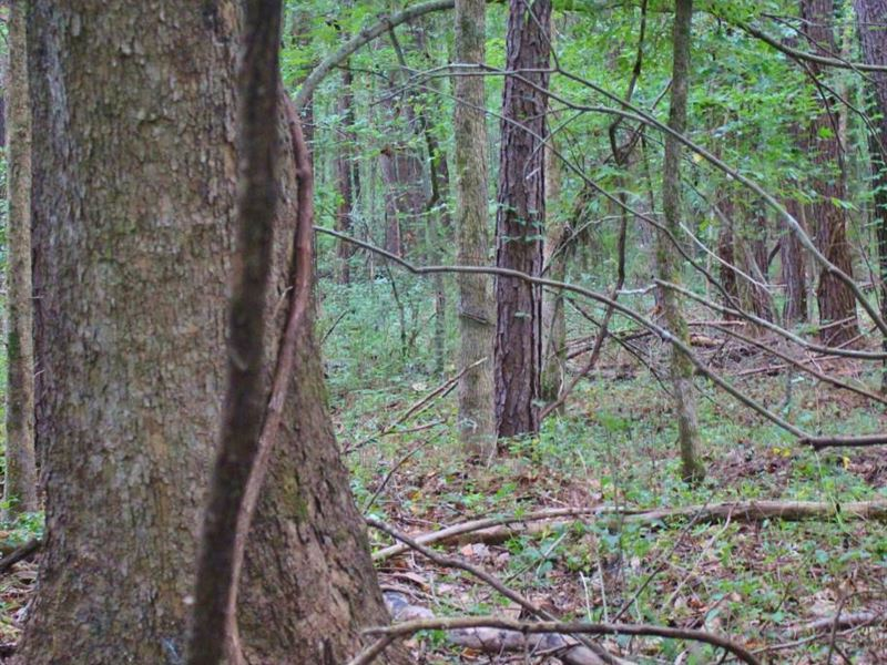 Beautiful Recreational Property : Canton : Madison County : Mississippi