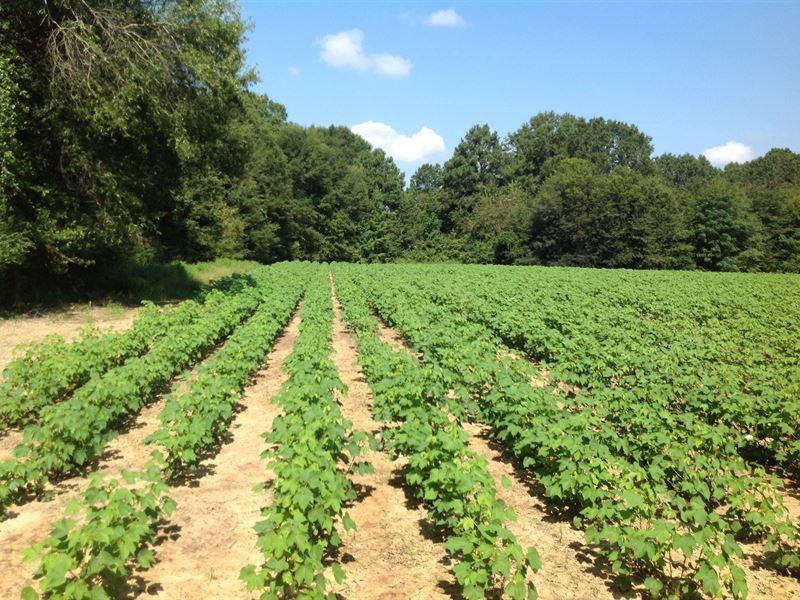 Farming And Hunting Land : Selma : Dallas County : Alabama