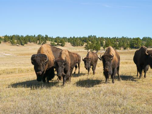 Stone Meadow Ranch : Custer : South Dakota