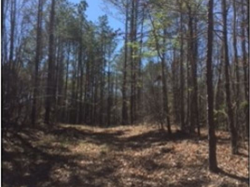 40 Acres In Lauderdale County : Meridian : Lauderdale County : Mississippi