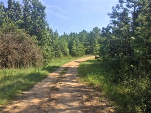 Hunting Land Timberland Sw Ms For S : Brookhaven : Lincoln County : Mississippi