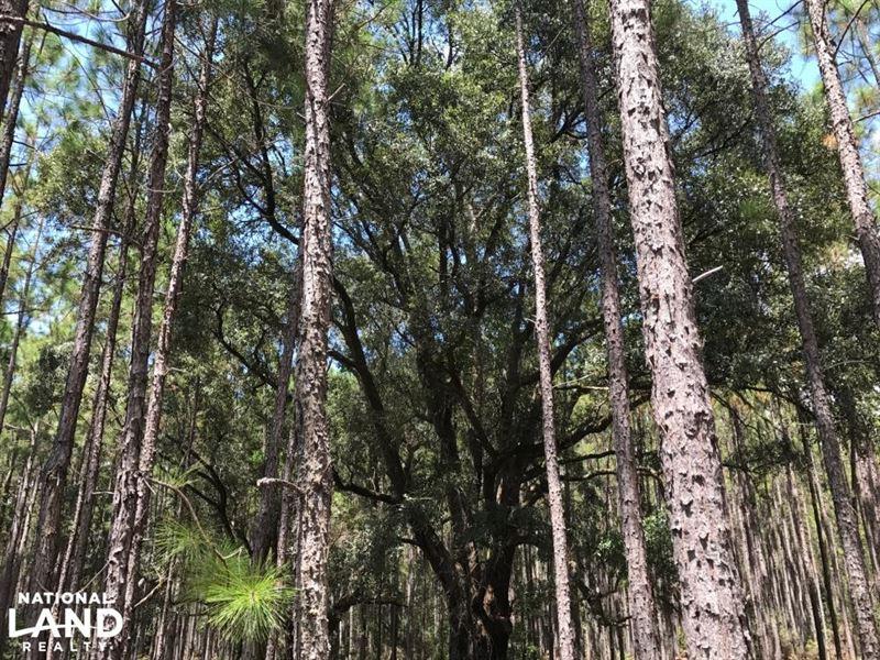 Laurens County Timber, Hunting And : Glenwood : Laurens County : Georgia
