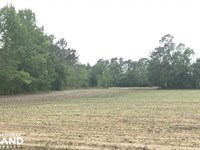 Anderson Field Road Home Site : Effingham : Florence County : South Carolina