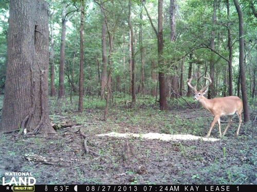 Becks Bay Limited - 8500 Acres : Woodville : Wilkinson County : Mississippi