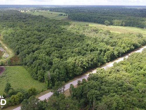 Shepherd 50 Acre Hunting/Timberland : Shepherd : San Jacinto County : Texas