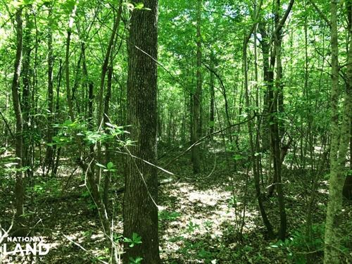 Indian Creek Hunting, Homesite, & W : Fayette : Alabama
