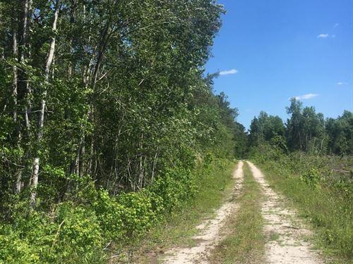 Nichols Hunting Property : Nichols : Horry County : South Carolina