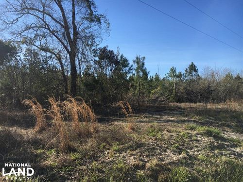 Finklea Hunting Property : Finklea : Horry County : South Carolina