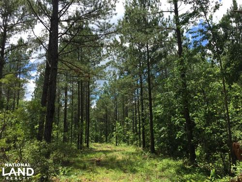 Quality Timber Tract Near Baxtervil : Lumberton : Lamar County : Mississippi