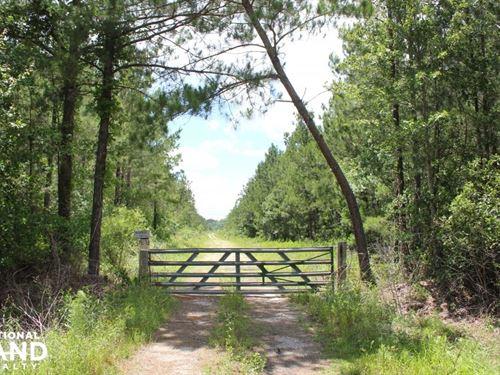 Berkeley County 283 Acres : Cross : Berkeley County : South Carolina