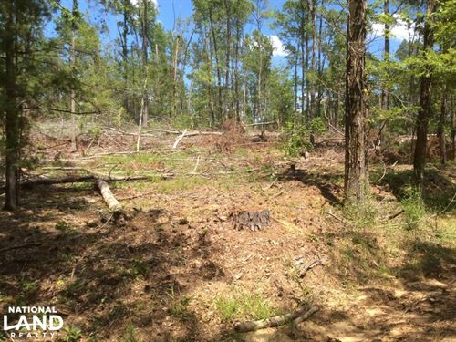 Deer/Turkey Hunting Tract : Utica : Hinds County : Mississippi