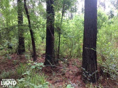 53.7 Acres, Hunting & Timber Inve : Terry : Hinds County : Mississippi