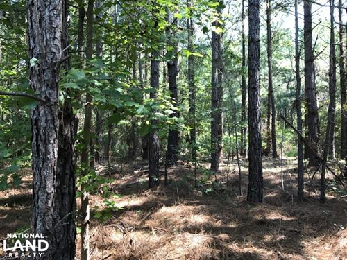 Hunting And Timber Investment : Manning : Clarendon County : South Carolina