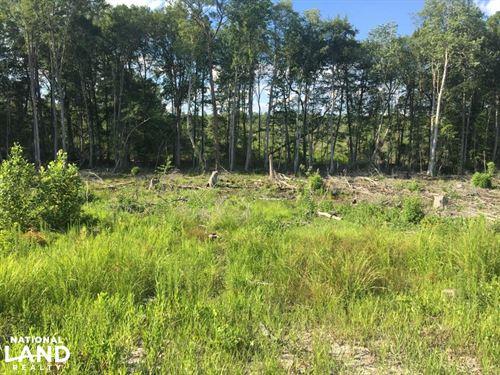 Healing Springs Timber And Investme : Healing Springs : Washington County : Alabama