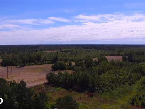 Highway 401 Farmland And Timber : Darlington : South Carolina