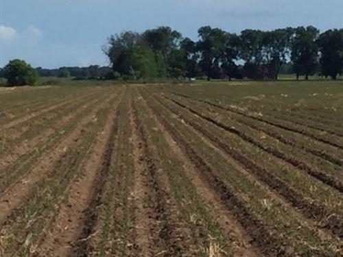 Chandler Farm : Ruleville : Sunflower County : Mississippi