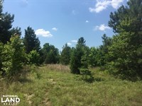 Neeses Hunting & Homesite : Neeses : Orangeburg County : South Carolina