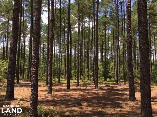 Mature Long Leaf Investment : Wagener : Aiken County : South Carolina
