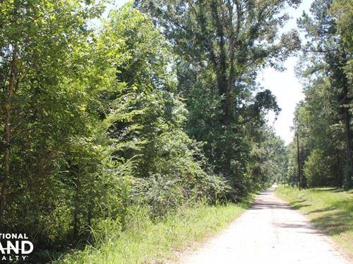 National Forest Large Acreage Home : Cordesville : Berkeley County : South Carolina