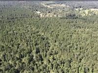 Polk County Hunting/Timberland With : Livingston : Polk County : Texas