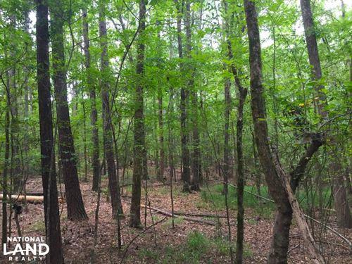 Shivers Green Homesite With Stream : Ridgeway : Kershaw County : South Carolina