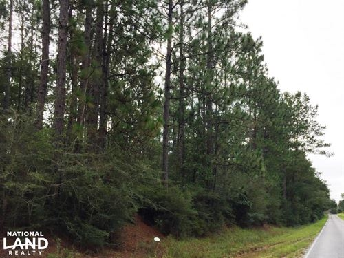 Timberland Investment Tract Near Si : Poplarville : Pearl River County : Mississippi