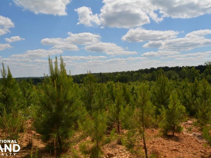 Sulligent Timber Investment And Rec : Land for Sale in ...