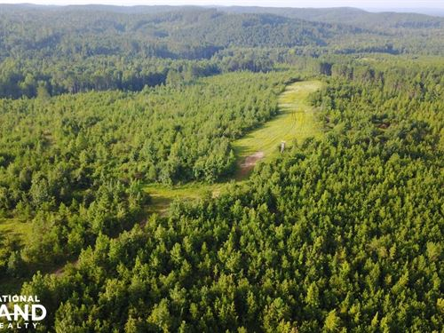 Northport Hunting And Timber Invest : Northport : Tuscaloosa County : Alabama