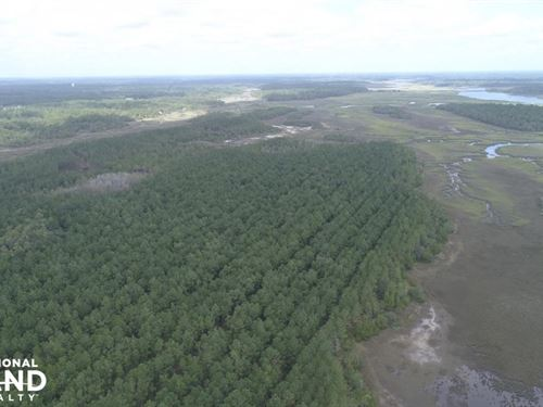 Ratcliffe Island : Brunswick : Glynn County : Georgia