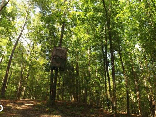 Secluded Recreation Property : McCormick : South Carolina