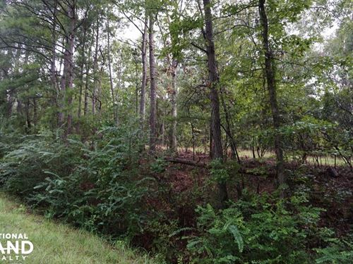 County Road 50 Homesite Parcel : Moundville : Hale County : Alabama