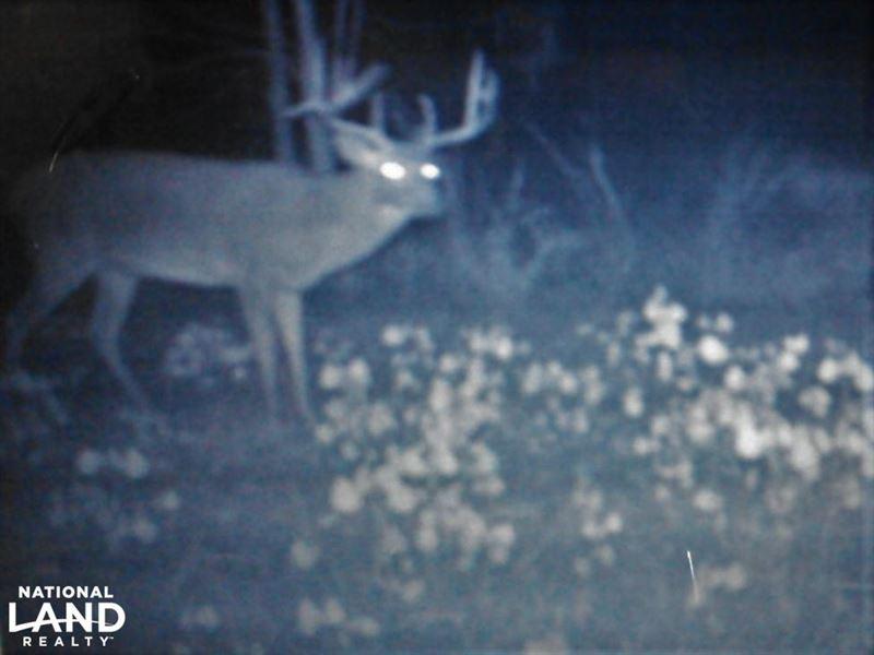 Laurens County Hunting, Homesite an : Wrightsville : Laurens County : Georgia