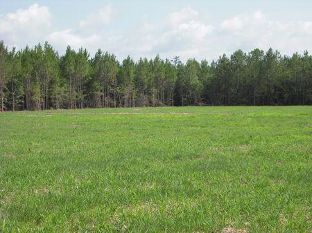 86.2 Acres : Tennille : Washington County : Georgia