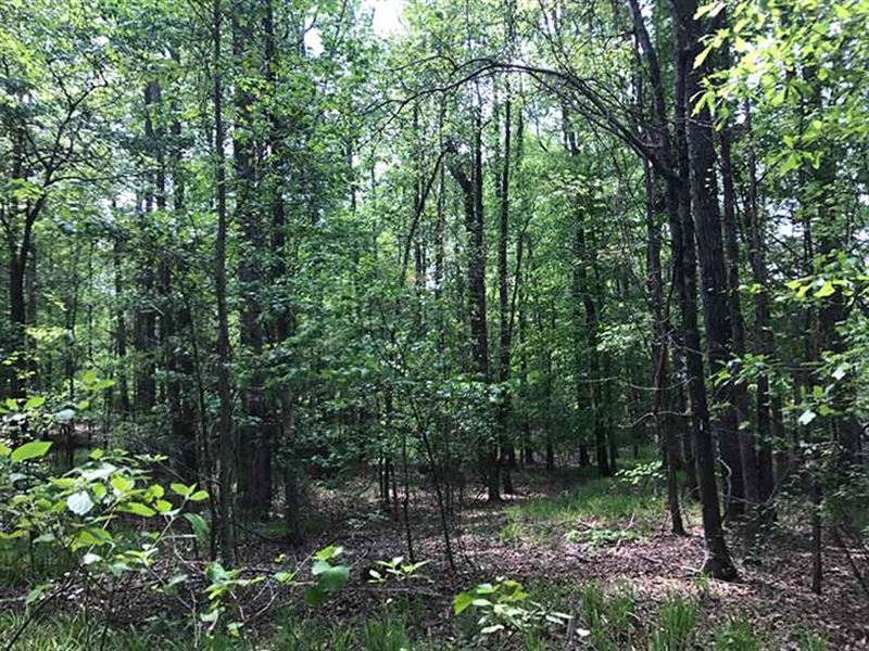 Great 30 Acre Hunting Property : Thomaston : Upson County : Georgia