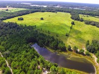 Pasture With Commercial Potential : Perry : Taylor County : Florida