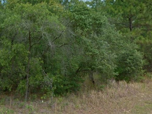 Citrus County, Fl $15,000 Neg : Citrus Springs : Citrus County : Florida