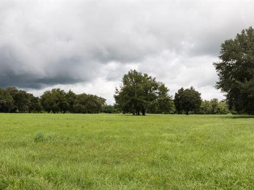 20 Acres Residential Land : Lakeland : Polk County : Florida