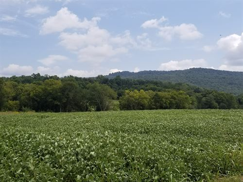 Beautiful Farm With 447.55+/-Acres : Huntland : Franklin County : Tennessee