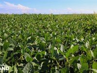 Colony Crops & Cattle : Colony : Anderson County : Kansas