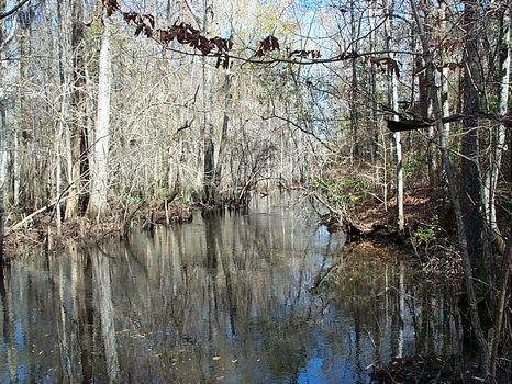 500 Acres - Ohoopee River : Adrian : Johnson County : Georgia
