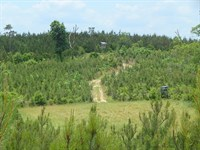 Camp & 180 Acres/ Oak Grove Roa : Prentiss : Jefferson Davis County : Mississippi