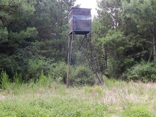 164 Acre Hunting Property : Tylertown : Walthall County : Mississippi