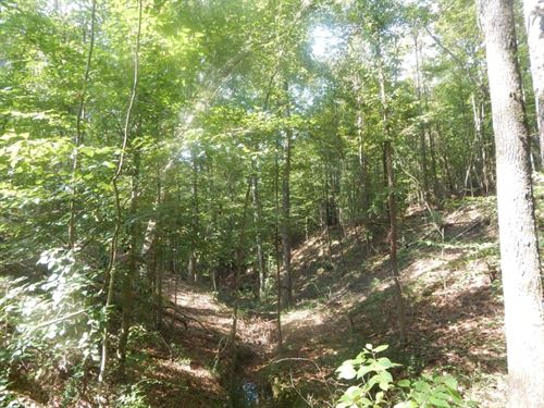 33.55 Acre Timberland And Hunting P : McComb : Pike County : Mississippi